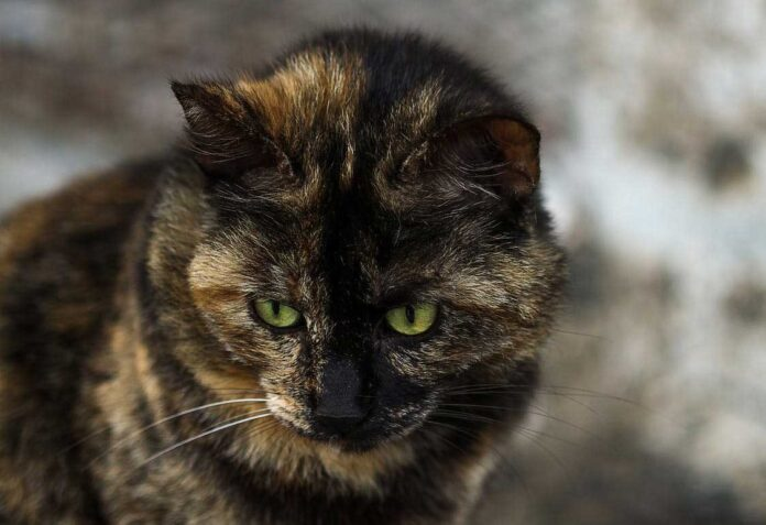 tribunale gatti processo