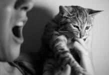 gatto che morde