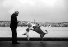 cane geloso
