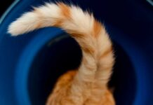 coda del gatto che trema