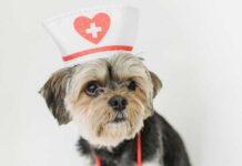 vaccini per cani