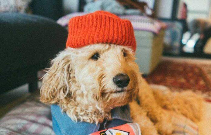 Antropomorfizzazione del cane