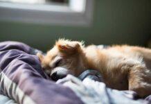 Come abituare il cane a dormire da solo