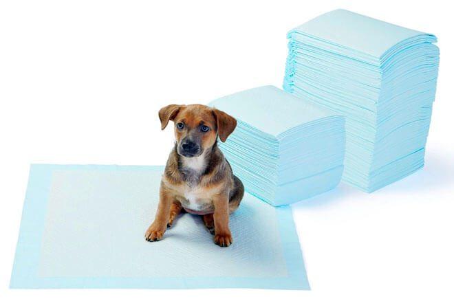 come insegnare al cane a fare i bisogni sulla traversina