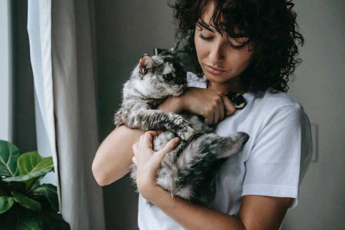 Come prendere un gatto in braccio