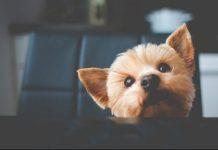 dieta veterinaria cani