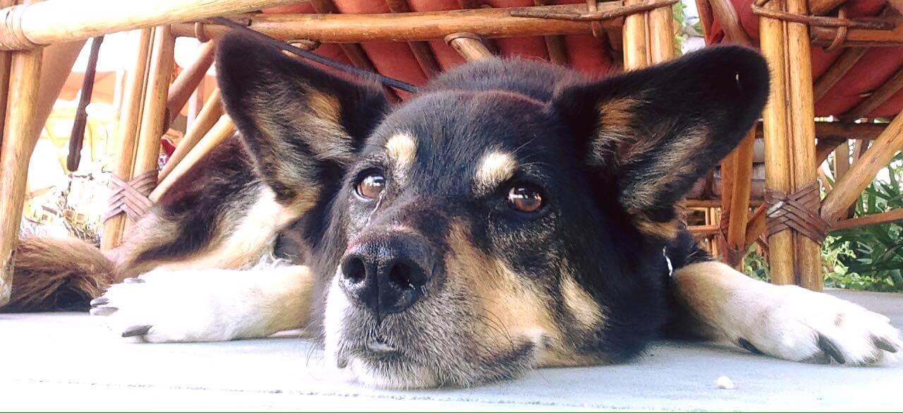 Hachika cani randagi creta