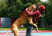 come insegnare al cane a non saltare addosso alle persone