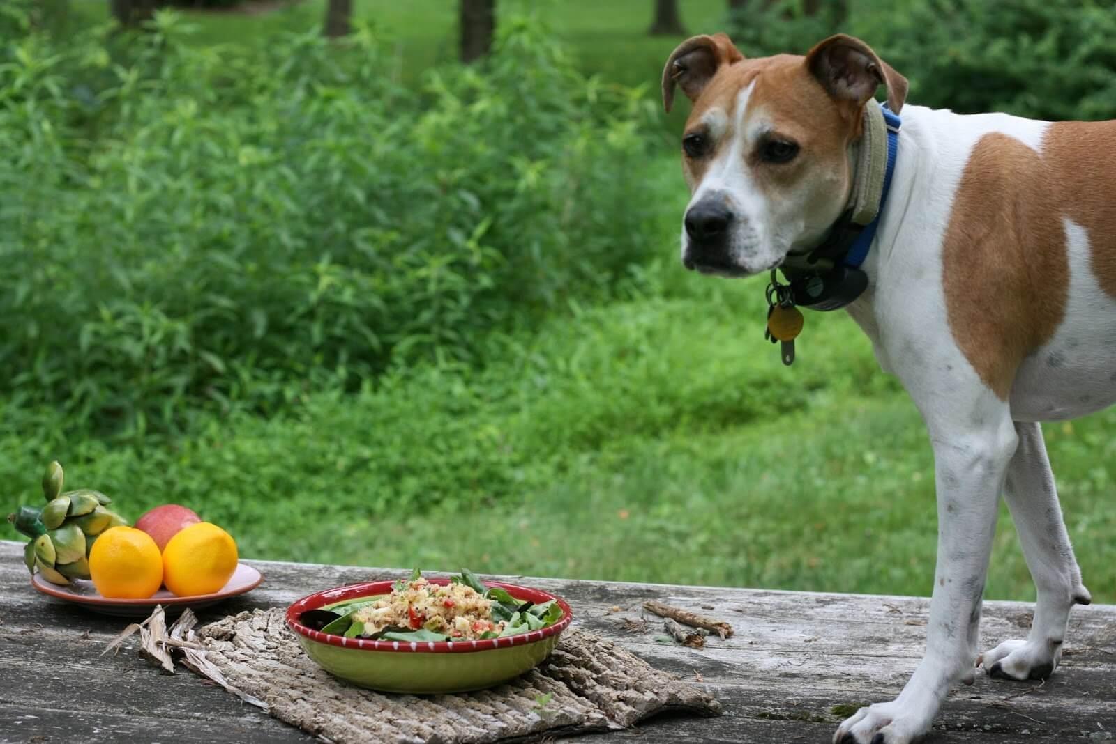 alimentazione naturale per cani