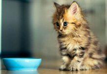 alimenti vietati ai gatti