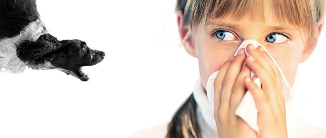 allergia ai cani