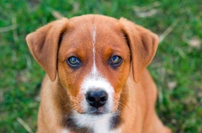 anemia cane cura