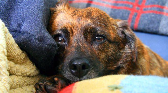 gastroprotettore per cani