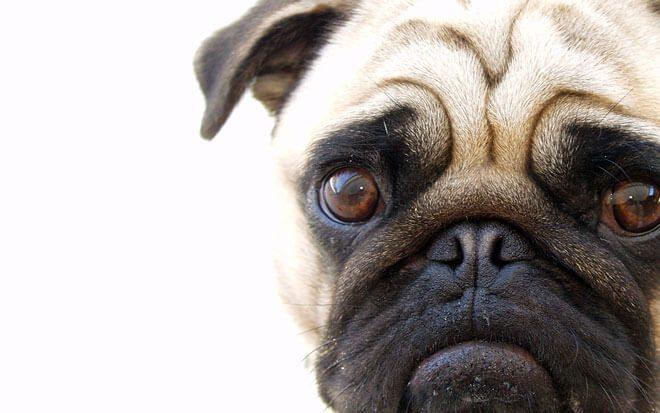 antinfiammatori per cani