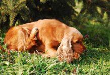 antiparassitario per il cane
