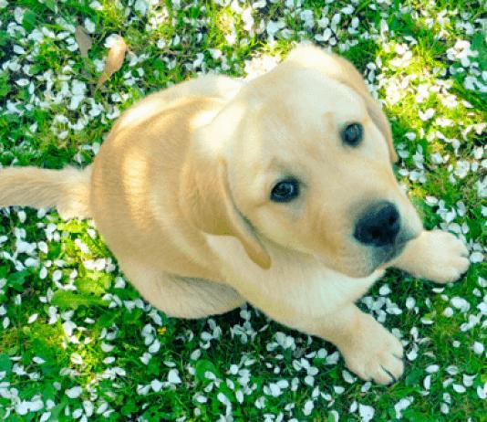 antipulci per cani