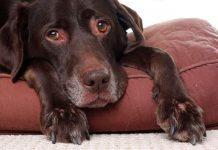 artrosi nel cane