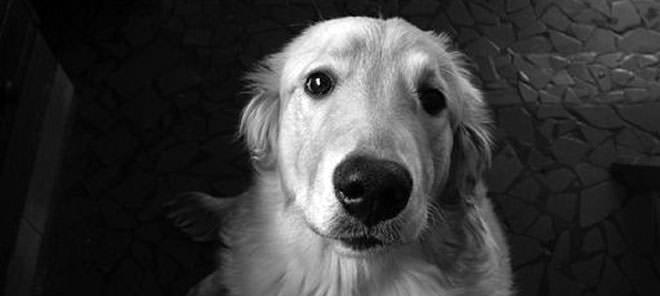 avvelenare un cane