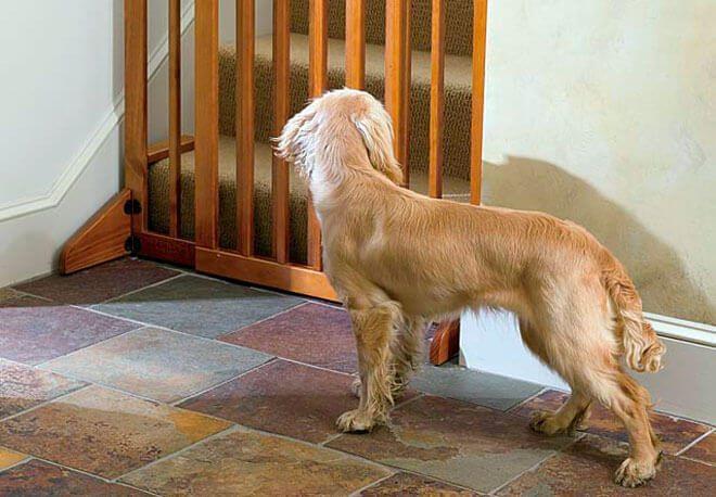cancello per cani fai da te