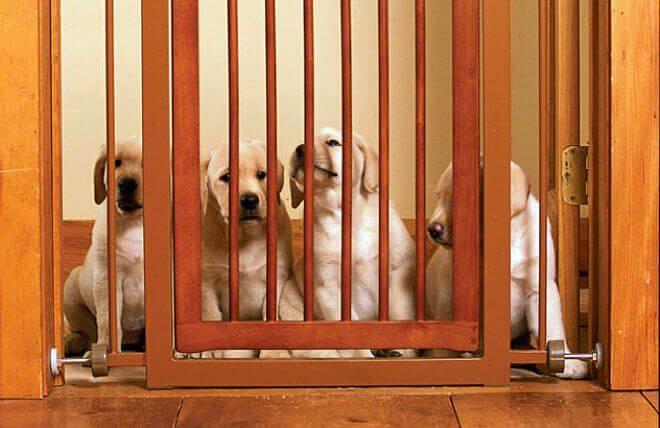 cancelletto per cuccioli