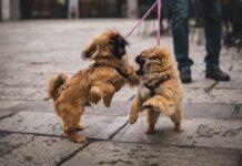cane aggressivo con altri cani