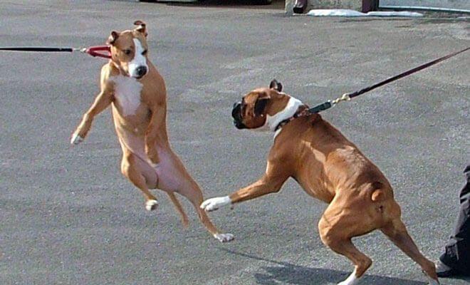 cane aggressivo verso altri cani