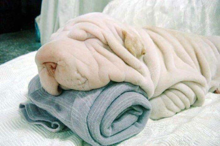 cane asciugamano