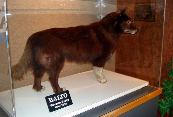 cane balto