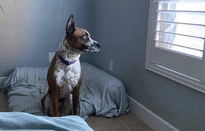 cane a casa da solo piange