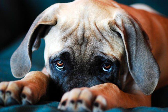 cane che chiede perdono
