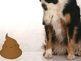 cane che mangia le feci