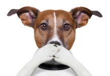 cane che puzza