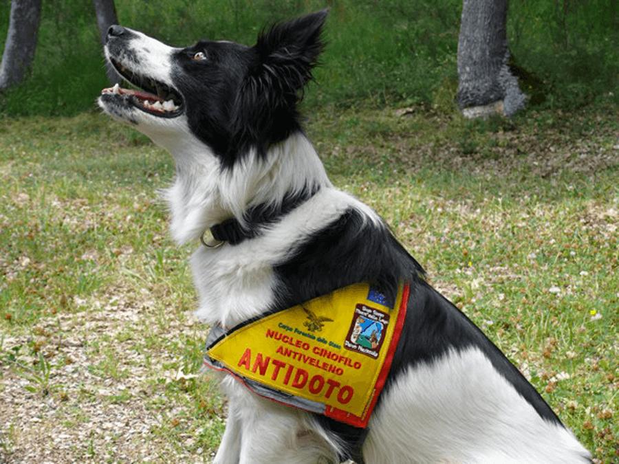 cane nucleo cinofilo antiveleno