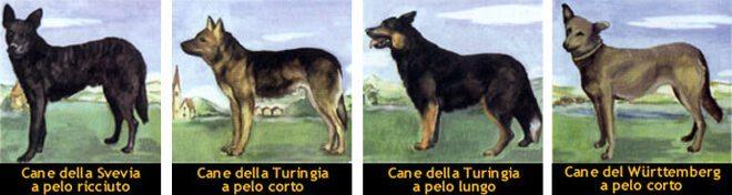 storia del pastore tedesco