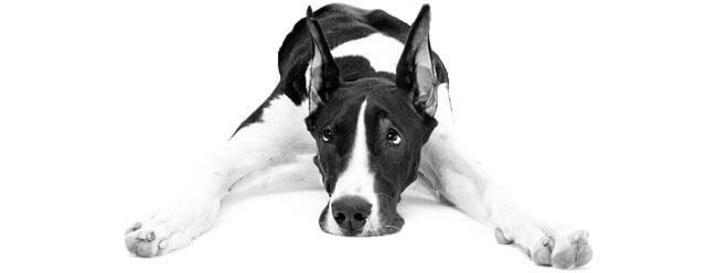 cane geloso del nuovo cucciolo
