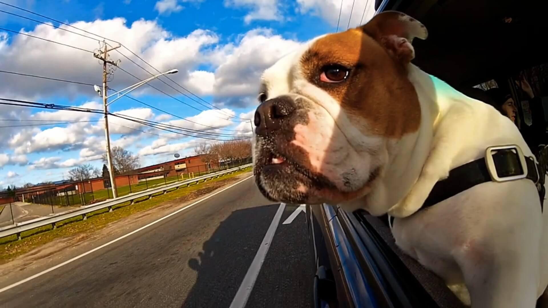 cane in auto e trasporto