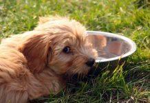 cane non beve