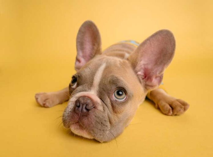 cane non ubbidisce