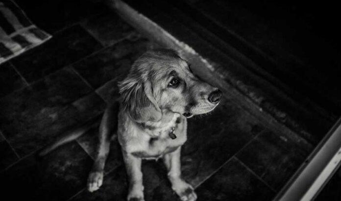 cane paura temporale