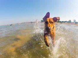 cane salva turista