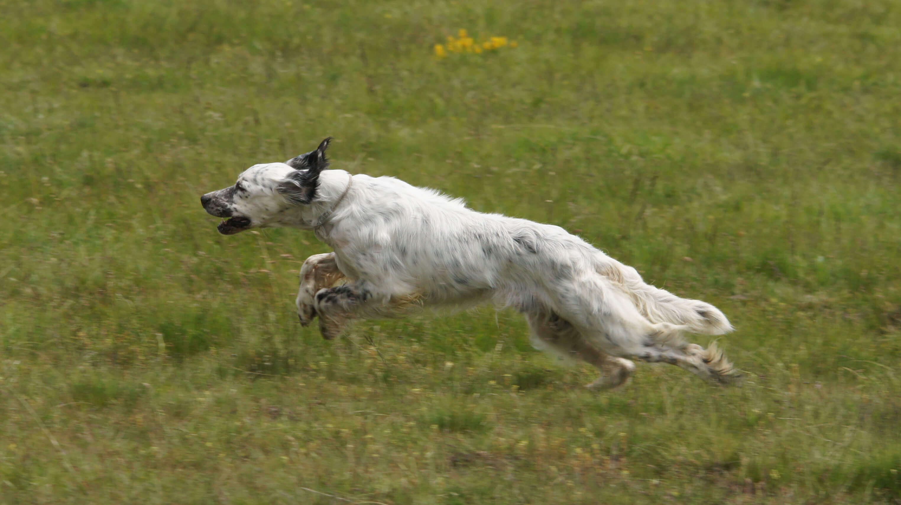 cane senza guinzaglio