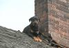 cane sul tetto