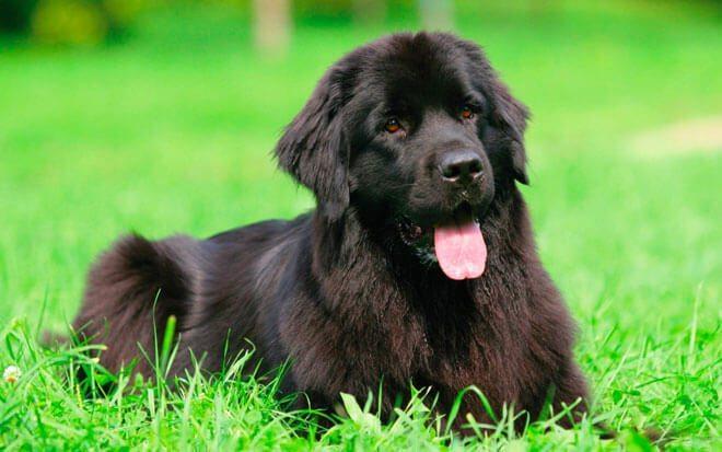 cane terranova