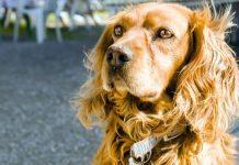 cani e terremoto
