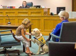 cani in aula tribunale