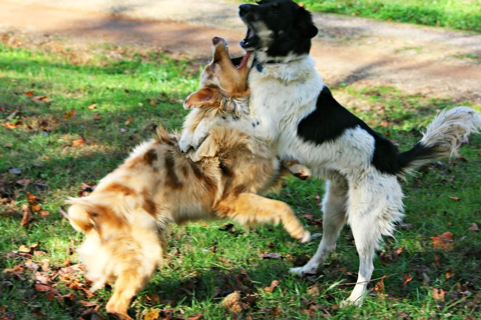 come educare il cane a non abbaiare agli altri cani