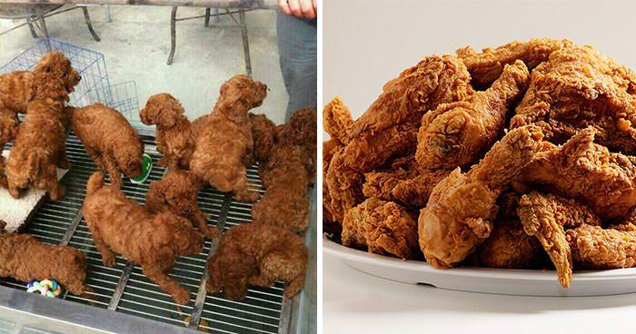 pollo cane