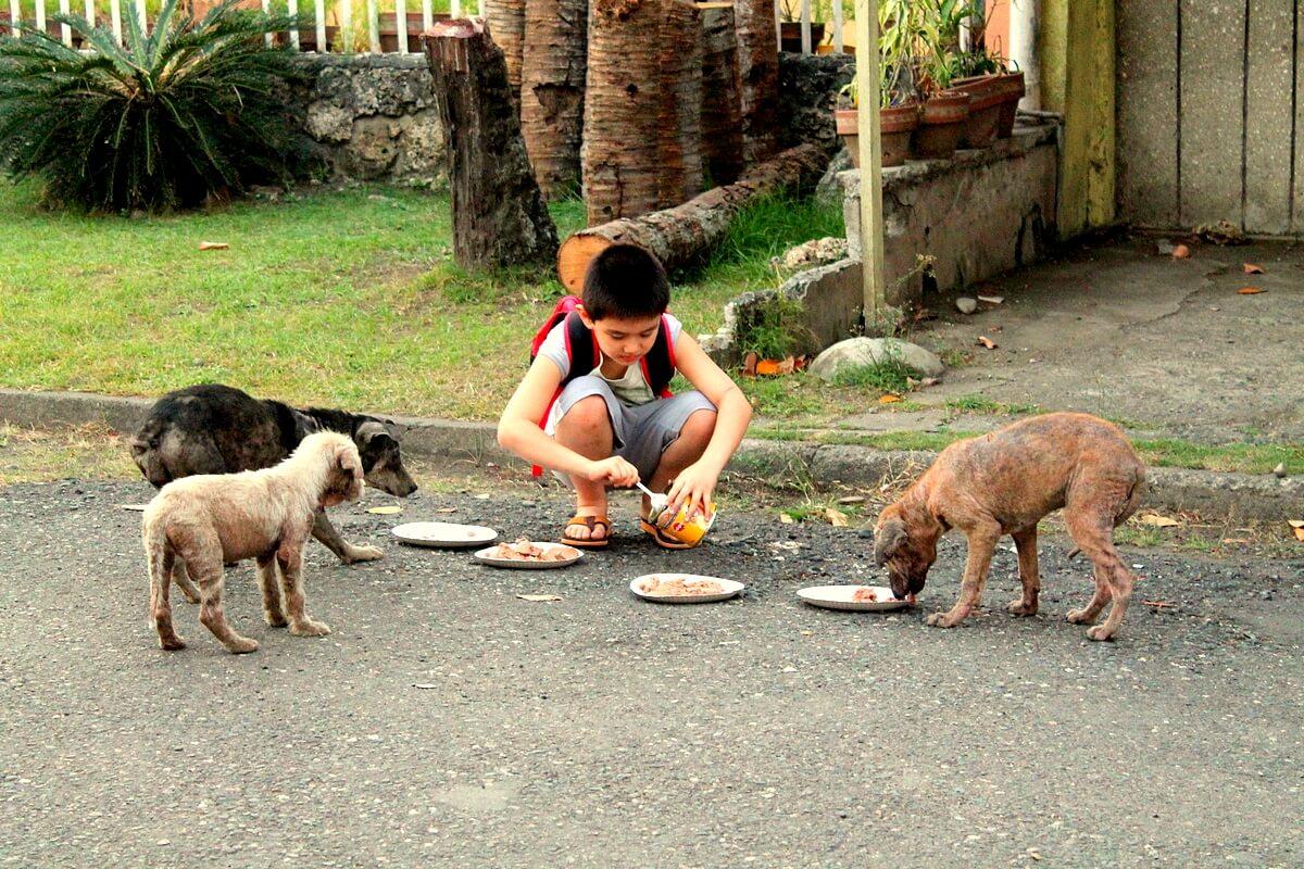cibo cani randagi