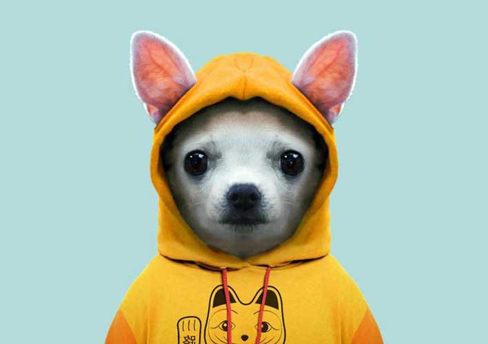 cani umanizzati