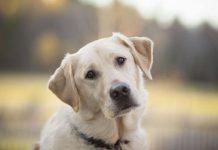 castrazione cane